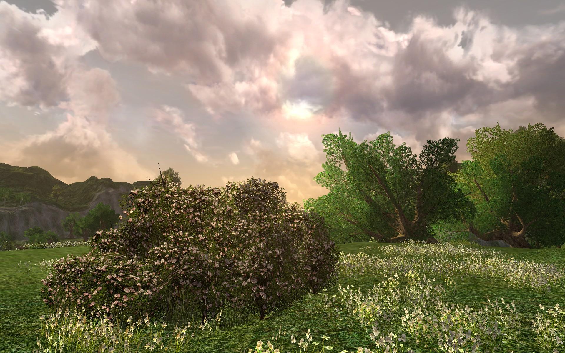 Grand Buisson De Roses Blanches Dimloth Melui Dco Du Milieu