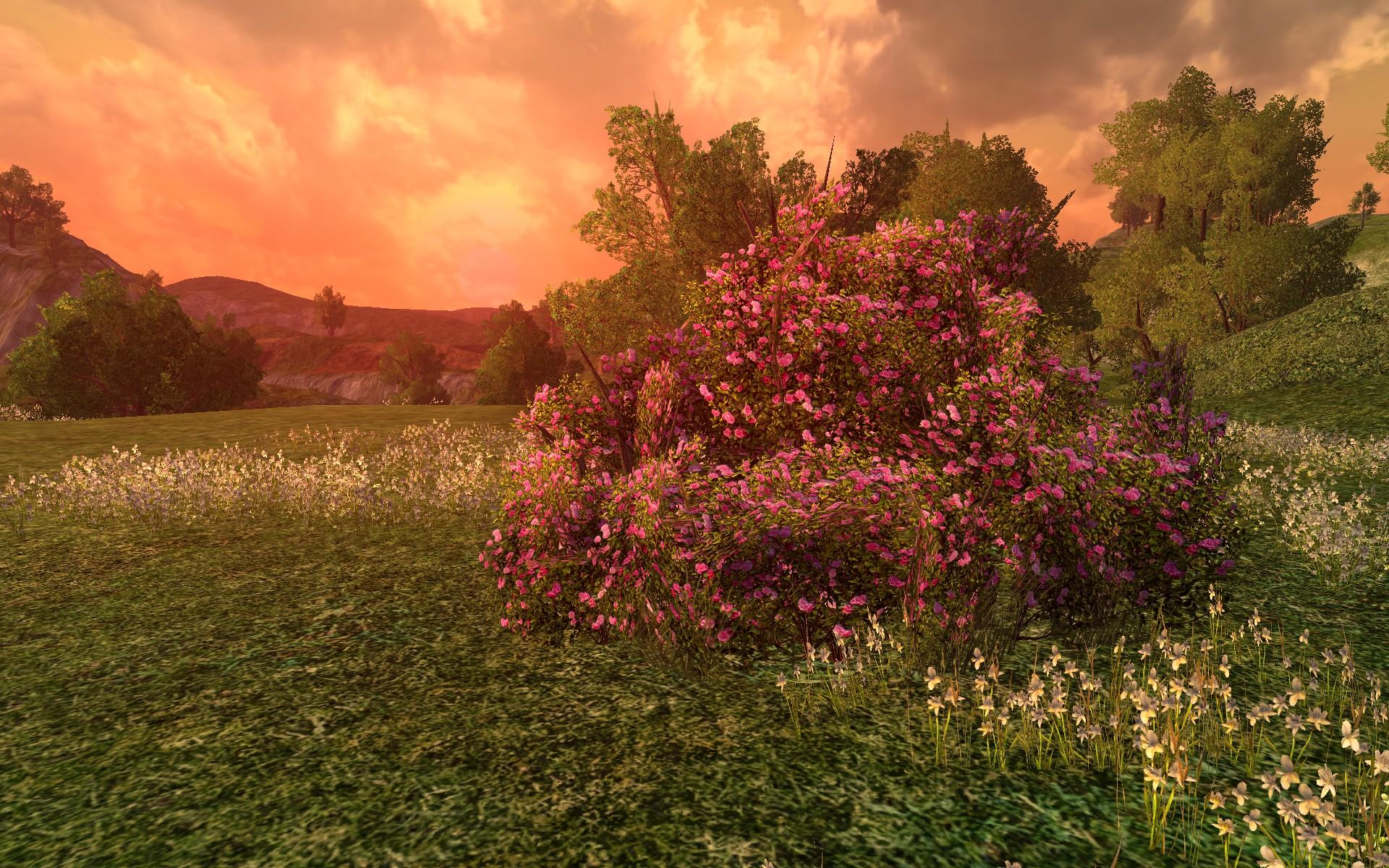 Grand Buisson De Roses Roses Dimloth Melui Dco Du Milieu